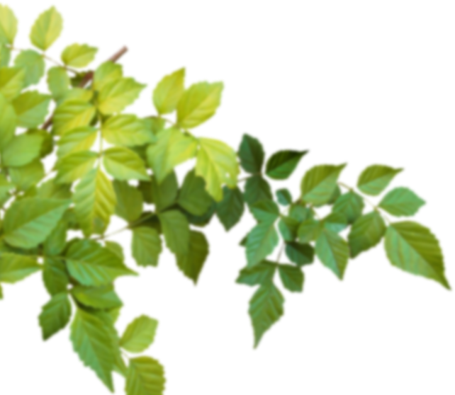 home-leaf-left